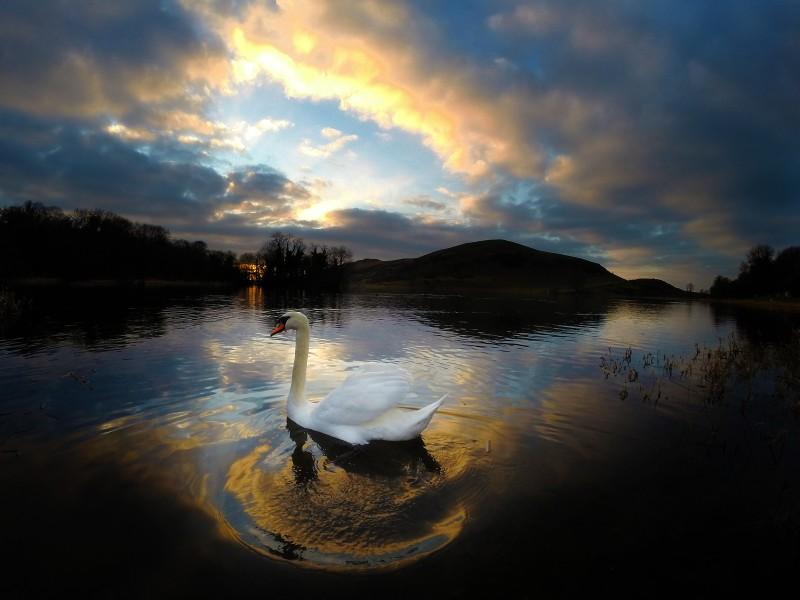 Walking Limerick: Guided Walking Tour of Lough Gur