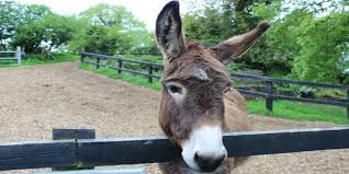This image has an empty alt attribute; its file name is donkey-sanctuary.jpg